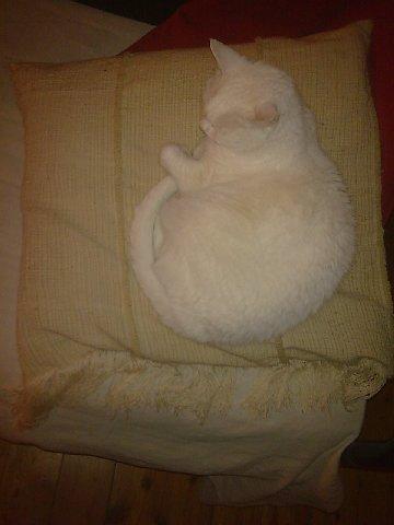 cuscino.jpg